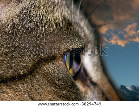 Cat flashed with sky background