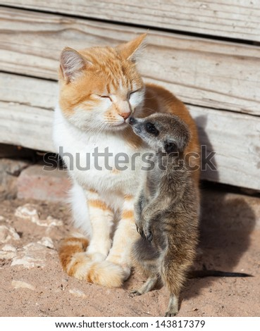 Cat friends - stock photo