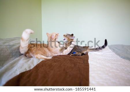 Cat Friends in Bedroom  - stock photo