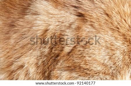 cat fur - stock photo