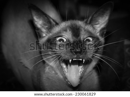 Cat Furious Face, with a little blur in Black and White - stock photo