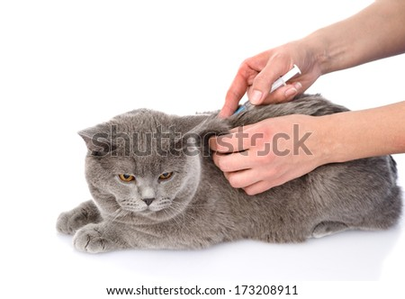 cat getting a vaccine at the veterinary clinic. isolated on white background - stock photo