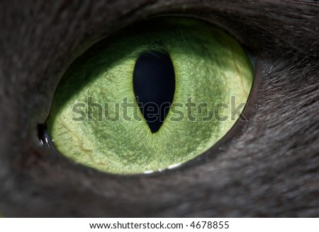 cat green eye with vertical pupil - stock photo