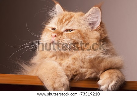 cat happy eyes expression animal black brown - stock photo