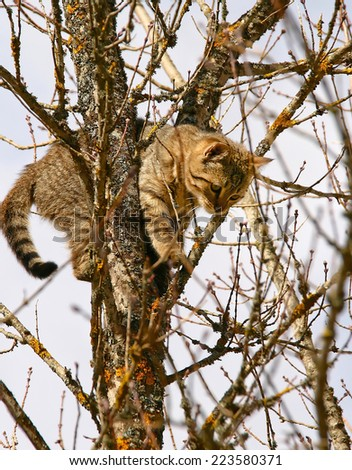 Cat has climbed the tree as she's afraid of the dog hunting her. - stock photo