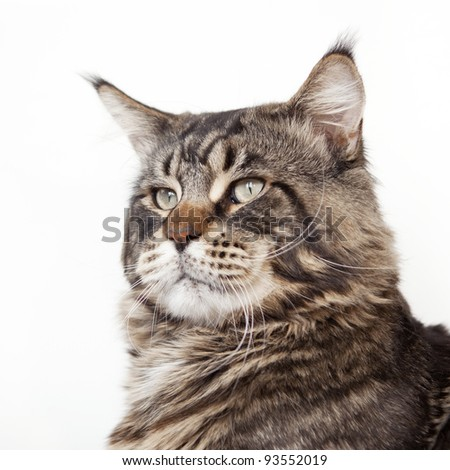 Cat head - stock photo