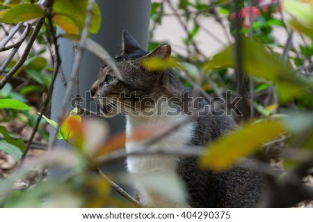 cat hiding in bushes - grey and white color