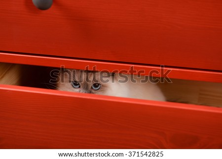 Cat hiding in the red wooden drawer - stock photo
