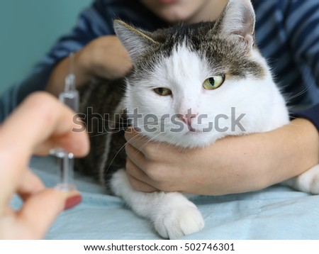 cat hold by owner at veterinarians cabinet ready to have a vaccination injection. Cute cat. Quiet cat.