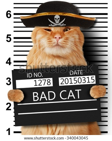 Cat holding a banner offender on white background. Violation of the law. - stock photo
