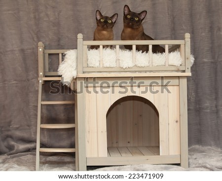 Cat house with cats in front of silver blanket - stock photo