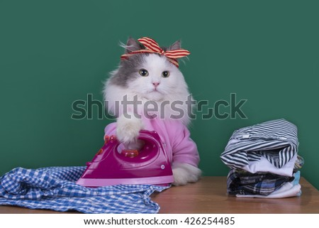 cat housewife to do housework and irons clothes