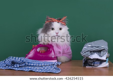 cat housewife to do housework and irons clothes - stock photo