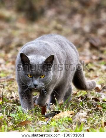 Cat Hunting - stock photo
