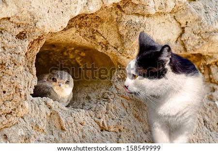 Cat hunts on a bird in nest - stock photo