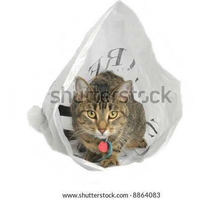 cat in a bag 2 50 iso - stock photo