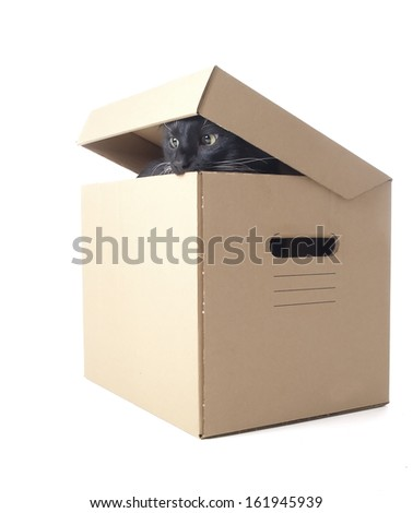 cat in a box on a white background in studio - stock photo