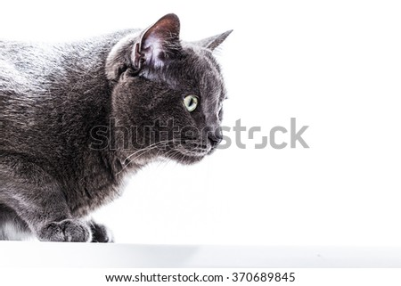 Cat in a Bright Background Setting