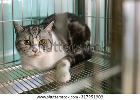 cat in a cage - stock photo