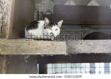 Cat in a cage in a shelter