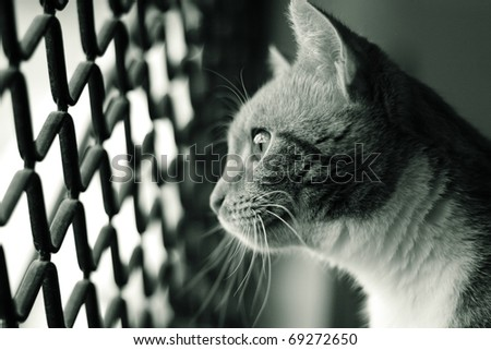 Cat in a cage looking out through the wire mesh to freedom - stock photo