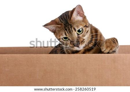 Cat in a cardboard box - stock photo