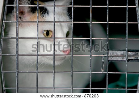 Cat in a crate or cage. - stock photo