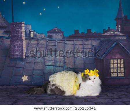 cat in a dress and a wreath of tsetov on the roof at night - stock photo