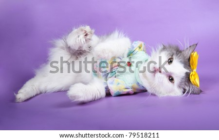 cat in a dress on a violet background