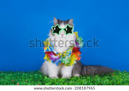 cat in a Hawaiian shirt - stock photo