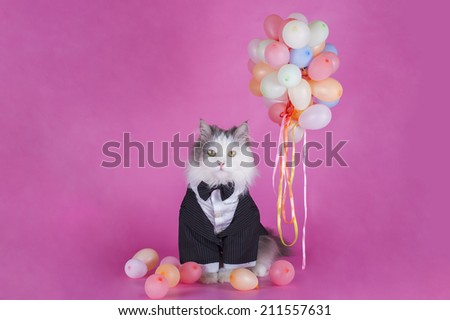 cat in a jacket congratulates  - stock photo