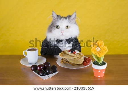 cat in a jacket pancake breakfast and coffee - stock photo