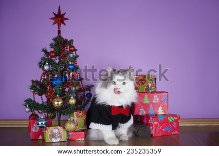 cat in a knitted sweater with gifts at Christmas tree - stock photo