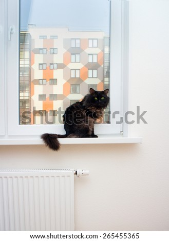 cat in a new house first undeveloped - stock photo