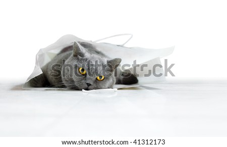 cat in a paper bag - stock photo