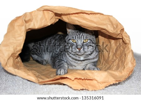 cat in a paper sack, german saying - stock photo