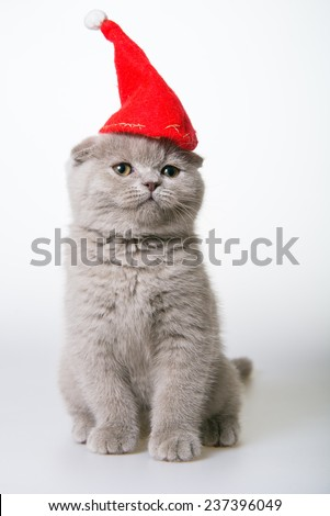 cat in a red cap. Christmas card. gray kitten in a Santa Claus hat on white - stock photo