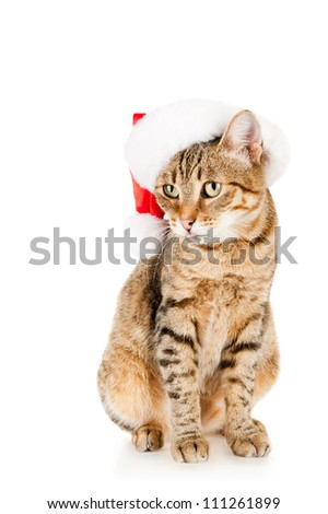 Cat in a Santa Claus hat, isolated on white - stock photo