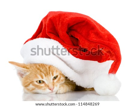 Cat in a Santa Claus hat. isolated on white background - stock photo