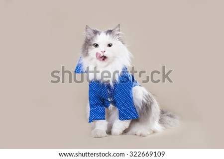 Cat in a shirt with a badge of social network - stock photo