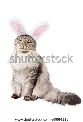 Cat in a suit of a rabbit isolated on white background - stock photo