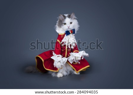 Cat in a suit of the Duke on a colored background isolated - stock photo