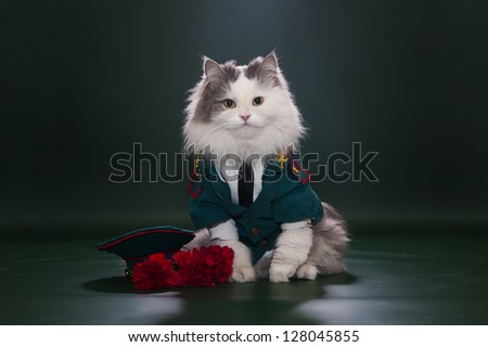 Cat in a suit on an isolated background of general - stock photo