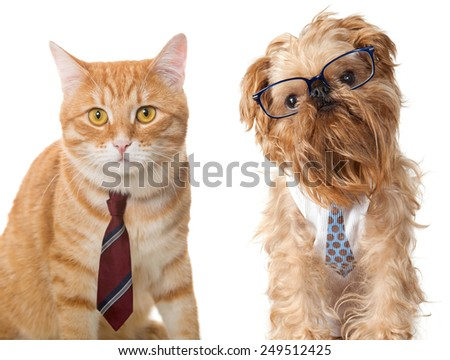 Cat in a tie and a dog wearing glasses, isolated on white - stock photo
