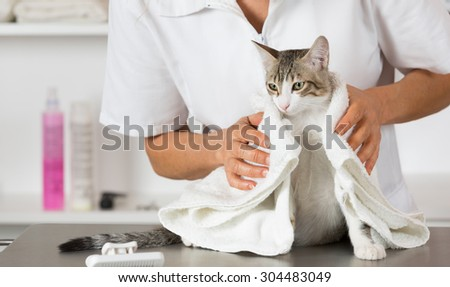 Cat in a veterinary clinic hairdresser doing beauty care - stock photo