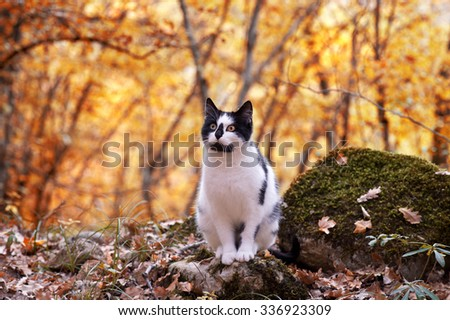 Cat in an autumn park. Cat sitting on the leaves - stock photo