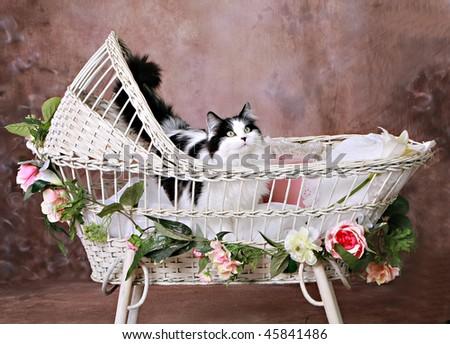 white antique wicker baby bassinet stock photo 45841480