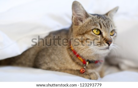 Cat in bed - stock photo