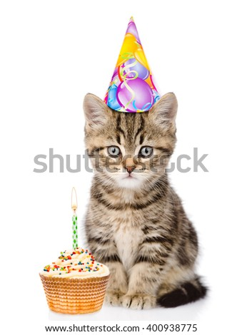 Cat in birthday hat and cake looking at camera. isolated on white background - stock photo