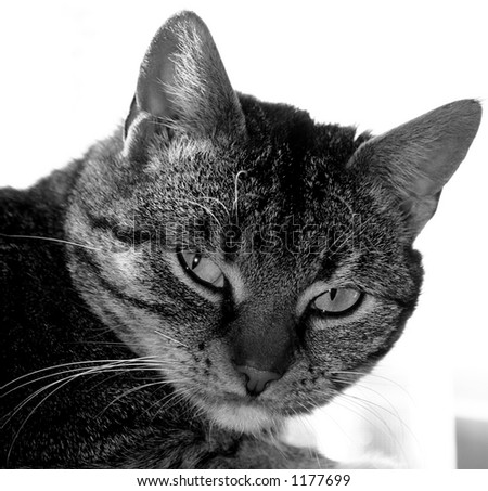 cat in black and white - stock photo